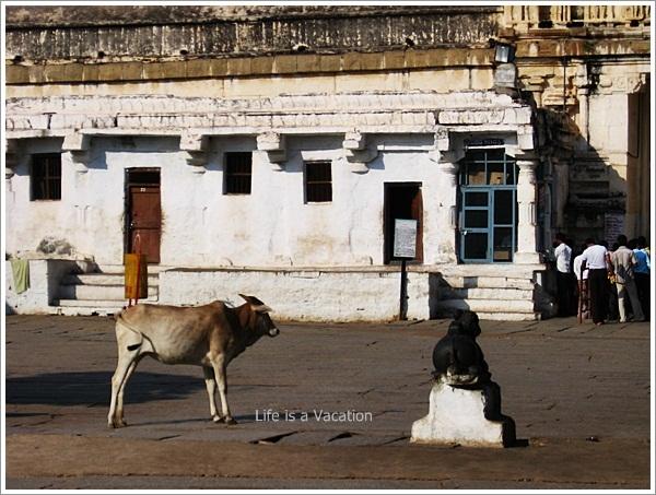 Hampi Virupaksha Temple Nandi