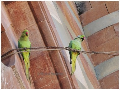 Birds in Prag Mahal