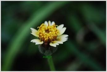 Botanial Garden Kolkata - Flower Bloom