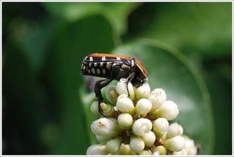 Botanical Garden Kolkata - Insect on the Flower