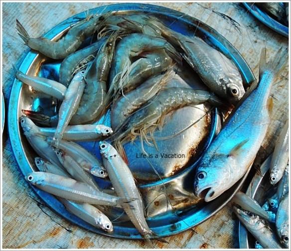 Foodie Trail in Kochi-Fresh Fish Catch in Kochi Kerala