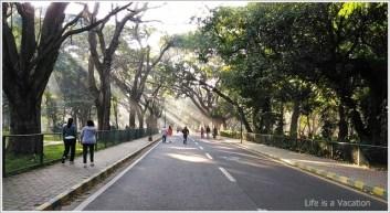 Cubbon Park Bangalore Tree Art
