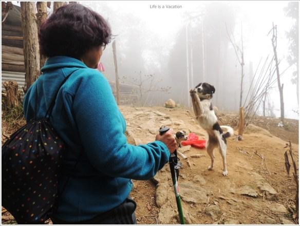 Sandakphu_Trek_Dog