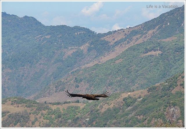 Sandakphu_Trek_Eagle_Kalapokhri
