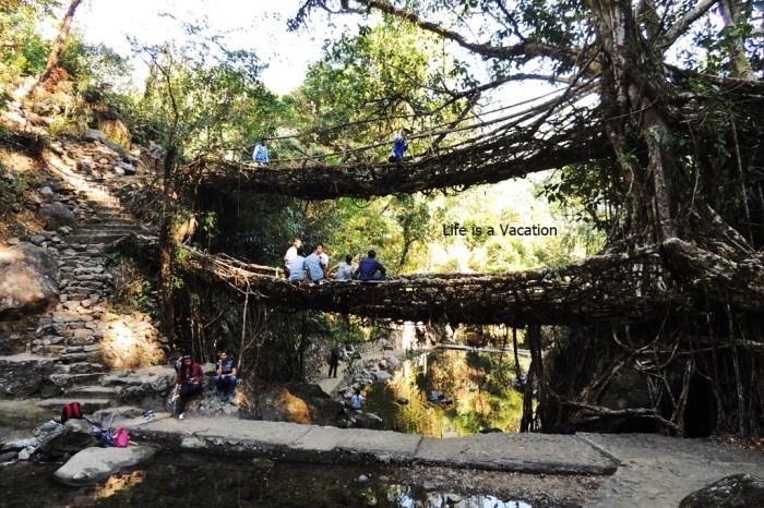 Sohra Trip - Root Bridge
