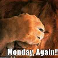 OMG! It's Monday