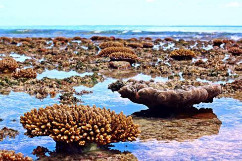 Bei Ebbe ragten unzählige Korallen aus dem Meer heraus.