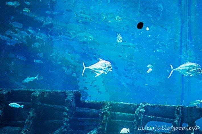 "Das Becken namens ""offener Ozean"""