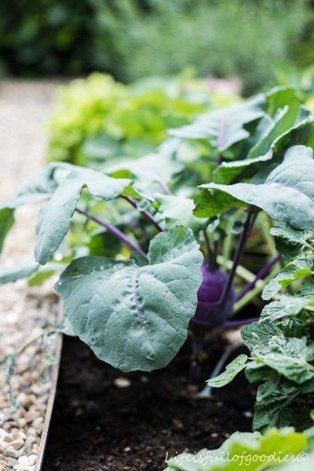 Mein Gemüsegarten - und warum Gartenarbeit schön macht