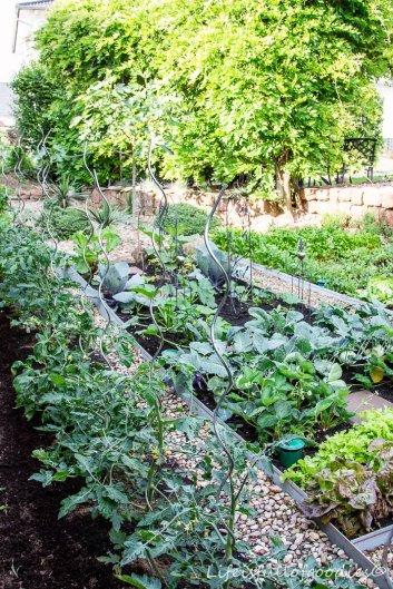 Gemüsegarten-29