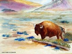 Bison 2