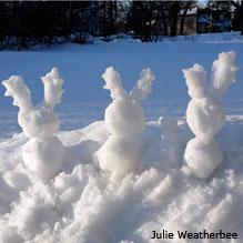 SnowAnimals