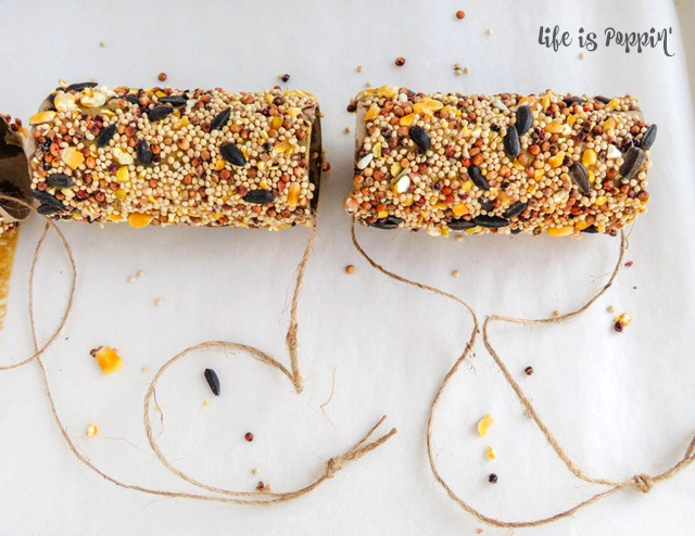 15+ Alimentadores de aves que los niños pueden hacer - Vivir bien mamá
