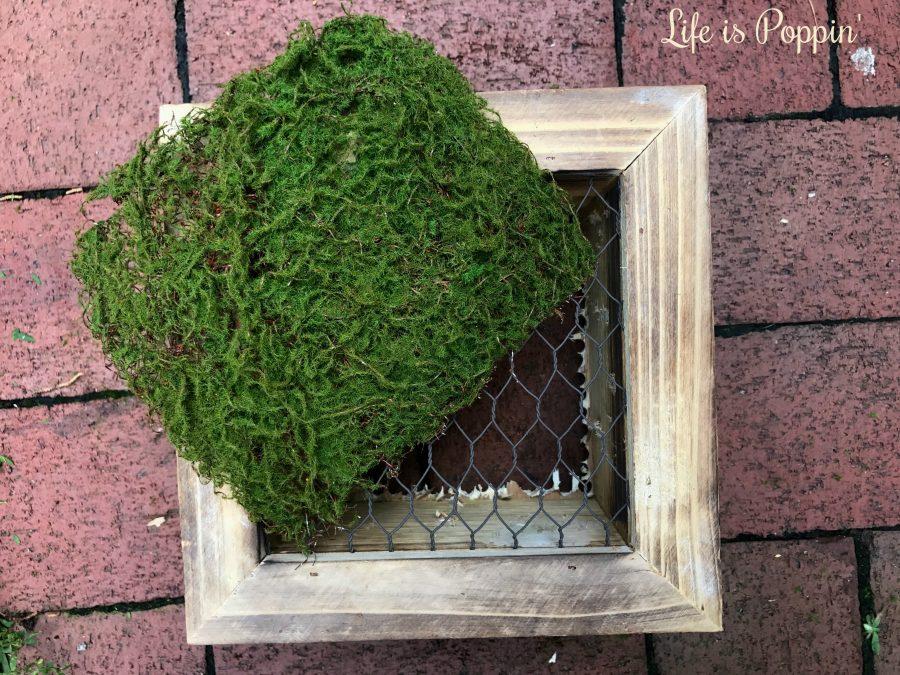 Succulent-planter-moss