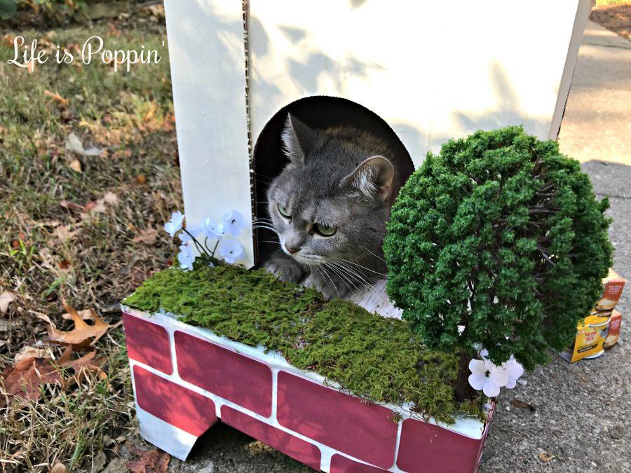 Kitty-Condo-Cardboard