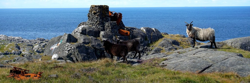 A rock formation with a bird painting on with a black and a white sheep stood nearby. The ocean is in the background