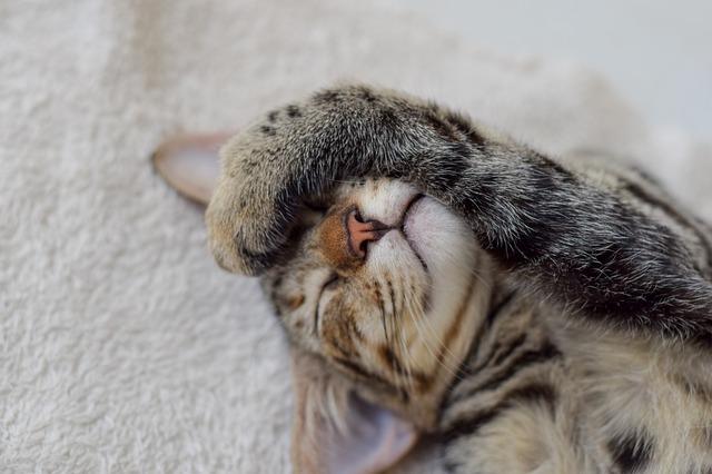cat-1912251_640.jpg