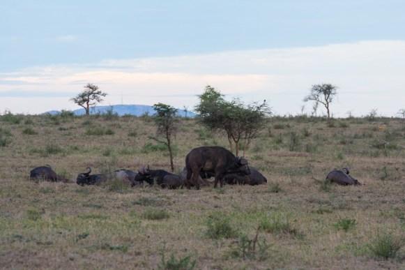 Tanzania, Serengeti (27)