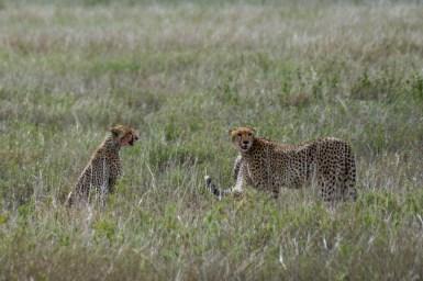 Tanzania, Serengeti (3)