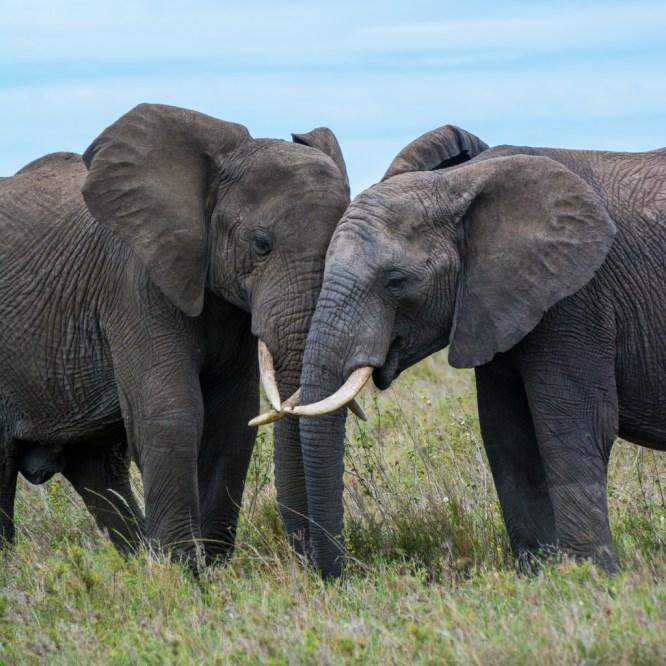 Tanzania, Serengeti (32)