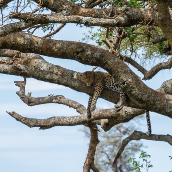 Tanzania, Serengeti (35)
