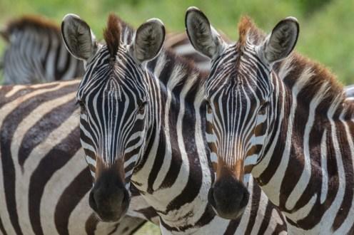 Tanzania, Serengeti (46)