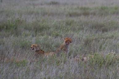 Tanzania, Serengeti (7)