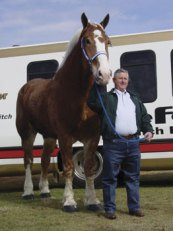 Priefert's Radar, Belgian gelding, who was tallest horse from 2006 - 2009