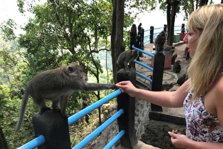 Monkey Forest, Lombok