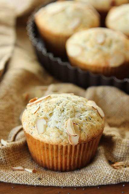 One standard size almond poppy seed muffin in front of a tart pan full of muffins