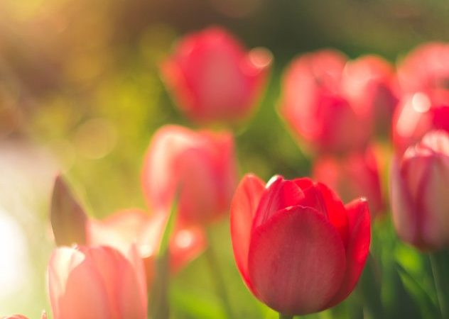 Flowers – A Haiku
