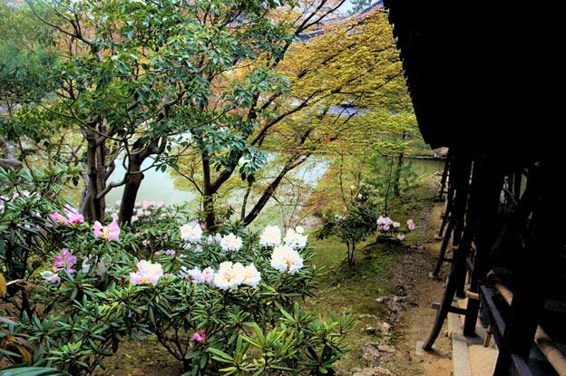 Киото ботанический сад японский сад