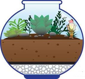 посадка кактуса в аквариум