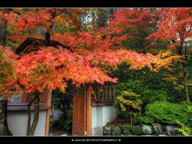 большие фотографии природы японский сад