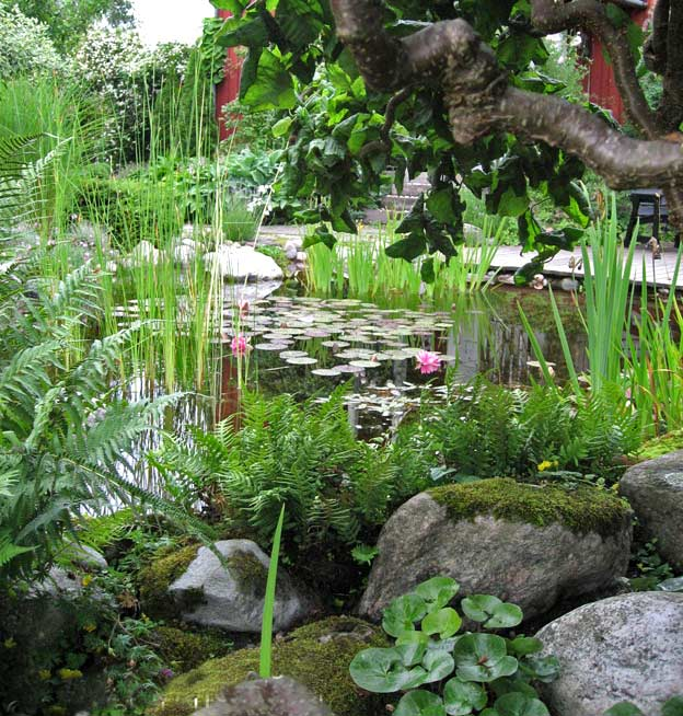 какие растения посадить в пруду