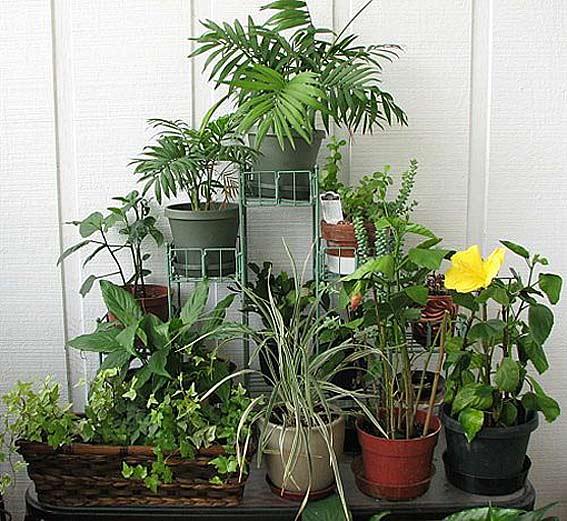 как вырастить зимний сад в доме квартире