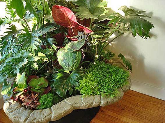 советы по разведению комнатных растений сад в квартире