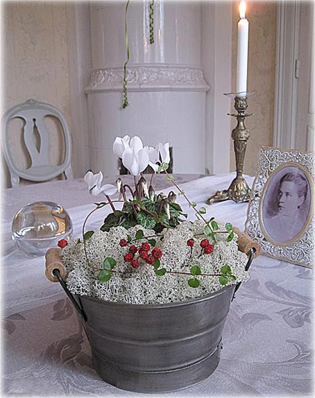 декорирование интерьера комнатными цветами цикламен