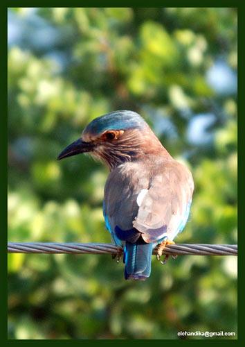 фауна птицы природа шри-ланки