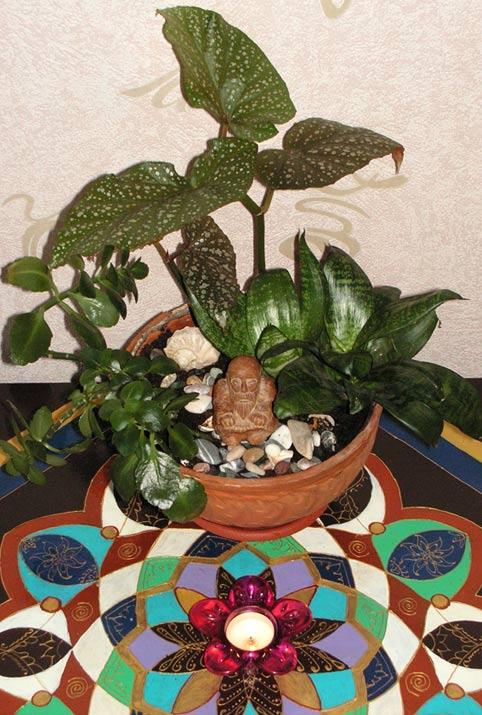 миниатюрный сад в плошке композиция из комнатных растений нецке