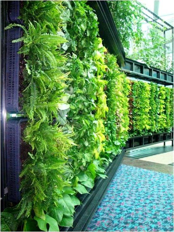 Вертикальное озеленение забора