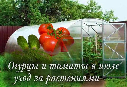 Огурцы и помидоры в июле - уход за растениями