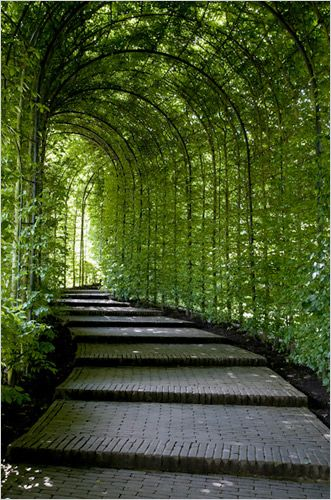 Вертикальное озеленение арки на даче
