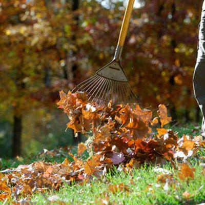 Сбор сухих листьев для компоста