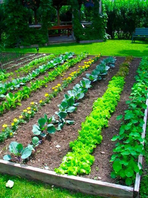 планировка огорода