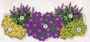 Ампельные цветы и растения в озеленении балконов и террас 6