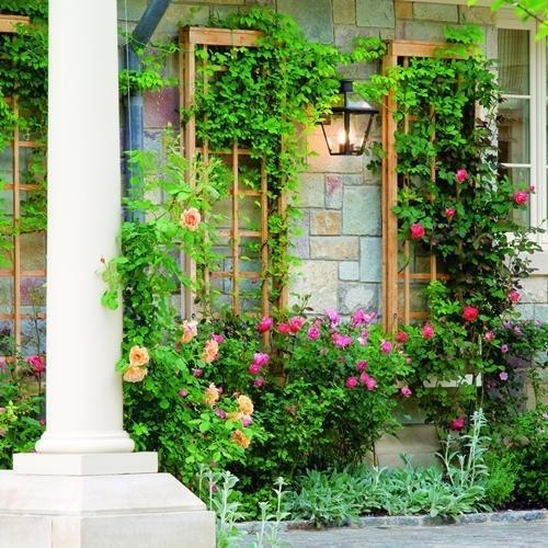 Вертикальное озеленение дачи