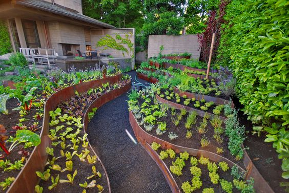 Планировка огорода под овощи