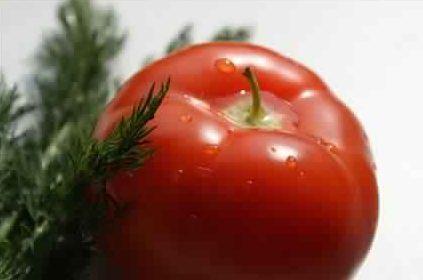 Как вырастить ранние помидоры