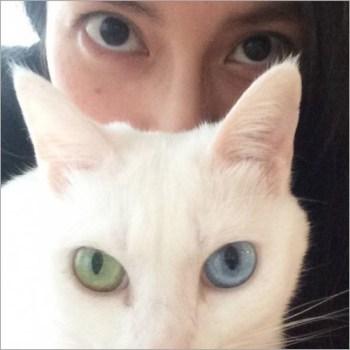 柴咲コウ 目 猫